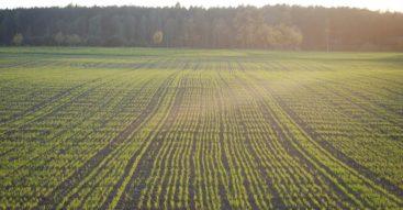 Ustawa o obrocie ziemią rolną. Większy nadzór nad procesem sprzedaży