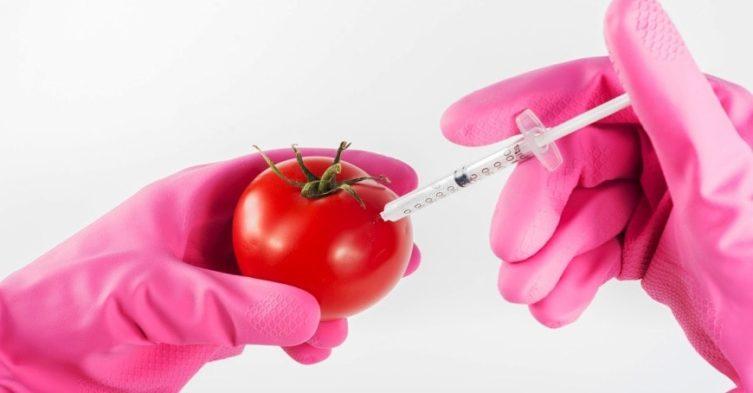 Spór o GMO