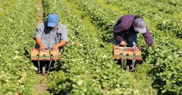 Nowe zasady zatrudniania cudzoziemców. Będzie większa kontrola nad przyjmowaniem pracowników z zagranicy?